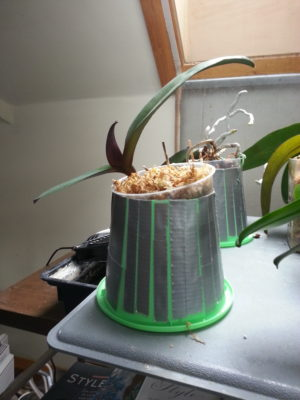 Figure 1.  Standard clear plastic orchid pot, placed inside of large, inverted  (green) plastic pot whose bottom has been removed. The green pot traps  heat from the gray heating pad below. The clear plastic pot ordinarily  would be placed snugly in the green pot but is askew, above, for  illustrative purposes.